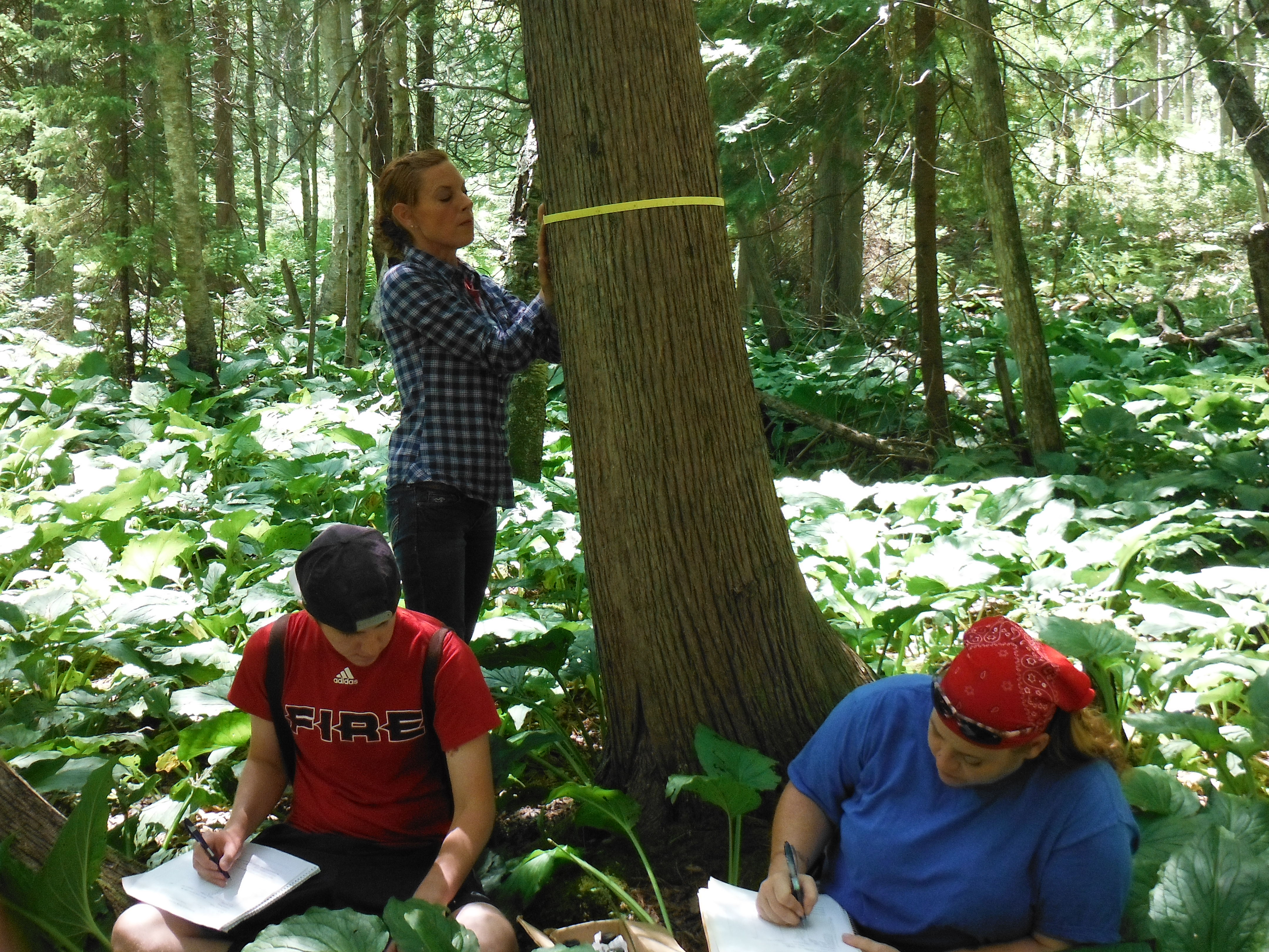 Diameter-taping a tree while students while students take down the numbers