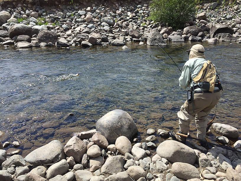 """Bruce into a 14"""" Slough Creek Cutt"""