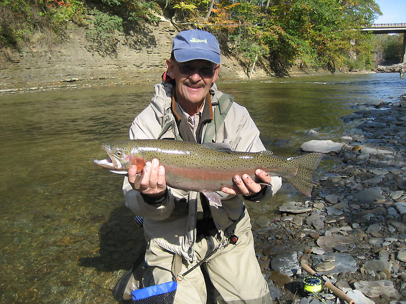 Lovely colored mid October steelhead.  Was surprised it was so colorful for so early in the season.