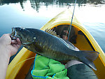 Smallmouth!!  And, a new personal record (by Jmd123 in Photography)