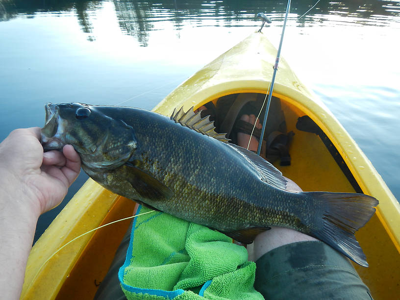 20 inches of smallmouth bass, my biggest ever!