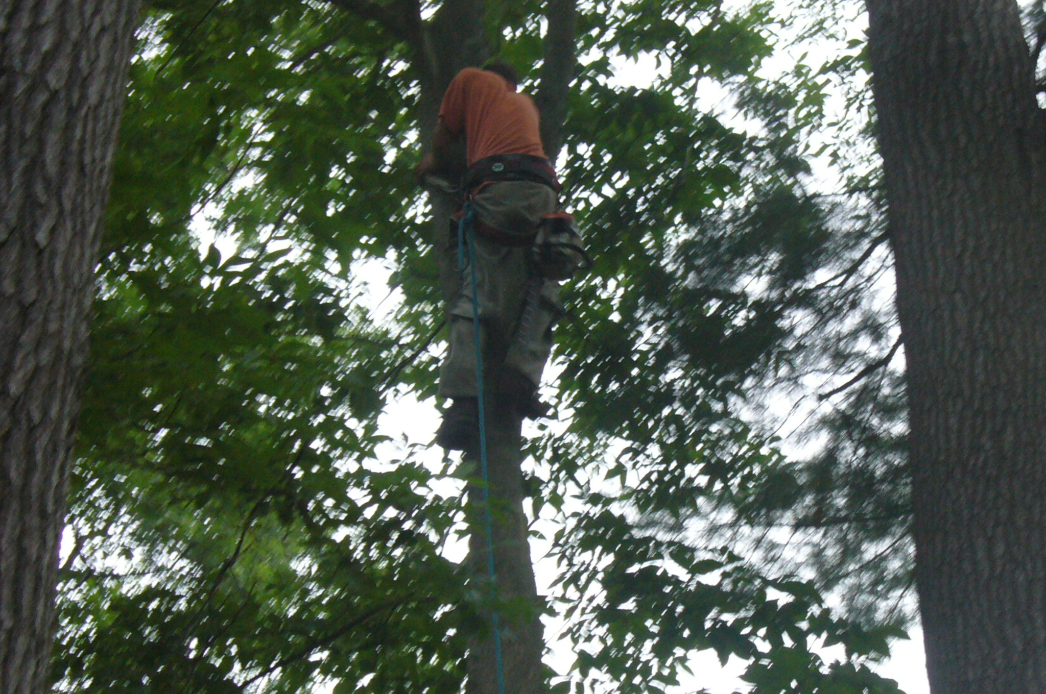 Trimming another tree