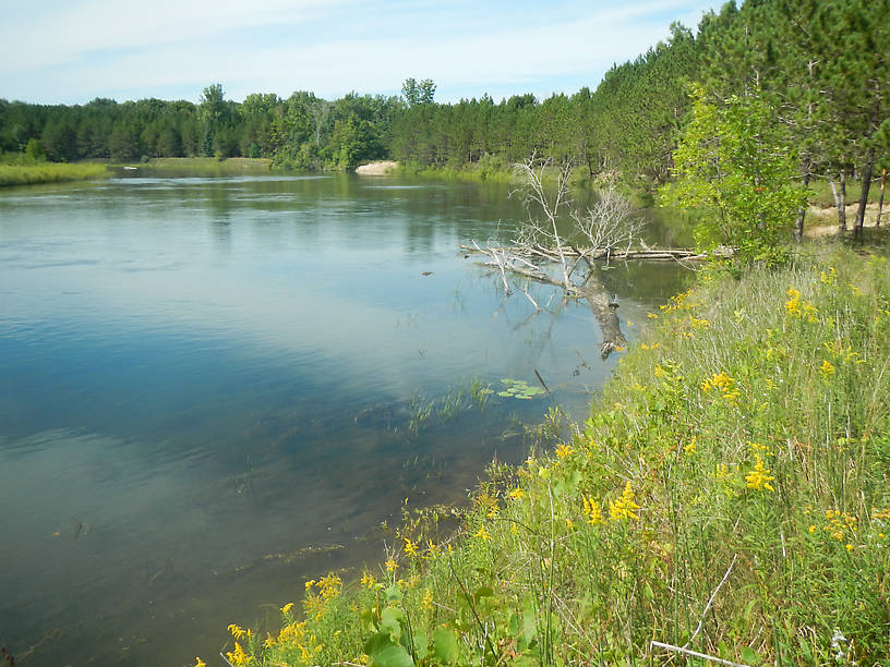 Goldenrods and aquatics along the banks of the Au Sable