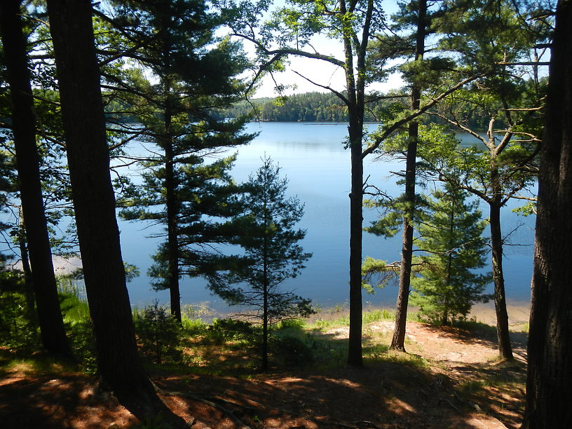 A two-track to primitive campsites on the north shore of Foote Pond led us here
