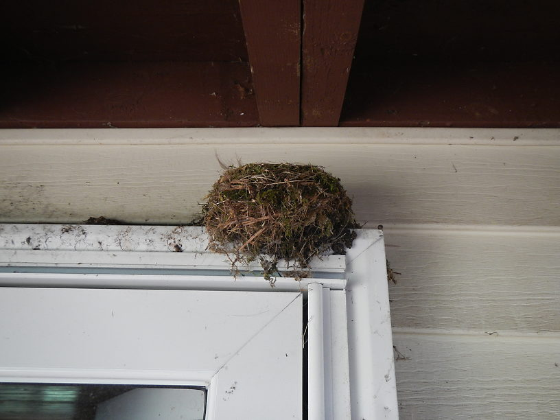 Four birds fledged out of this nest a few weeks after I moved in