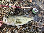 Personal Best Largemouth (by Summer_doug in Photography)