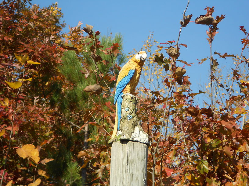 No, it's not the Virgin Mary...and I didn't know we had macaws in Michigan!
