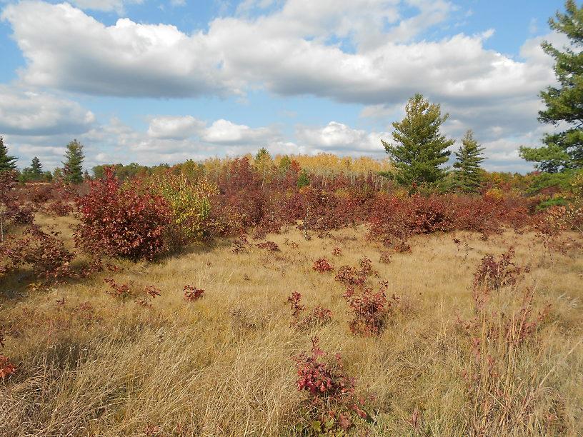 Prairie/savanna, habitat for smooth green snakes