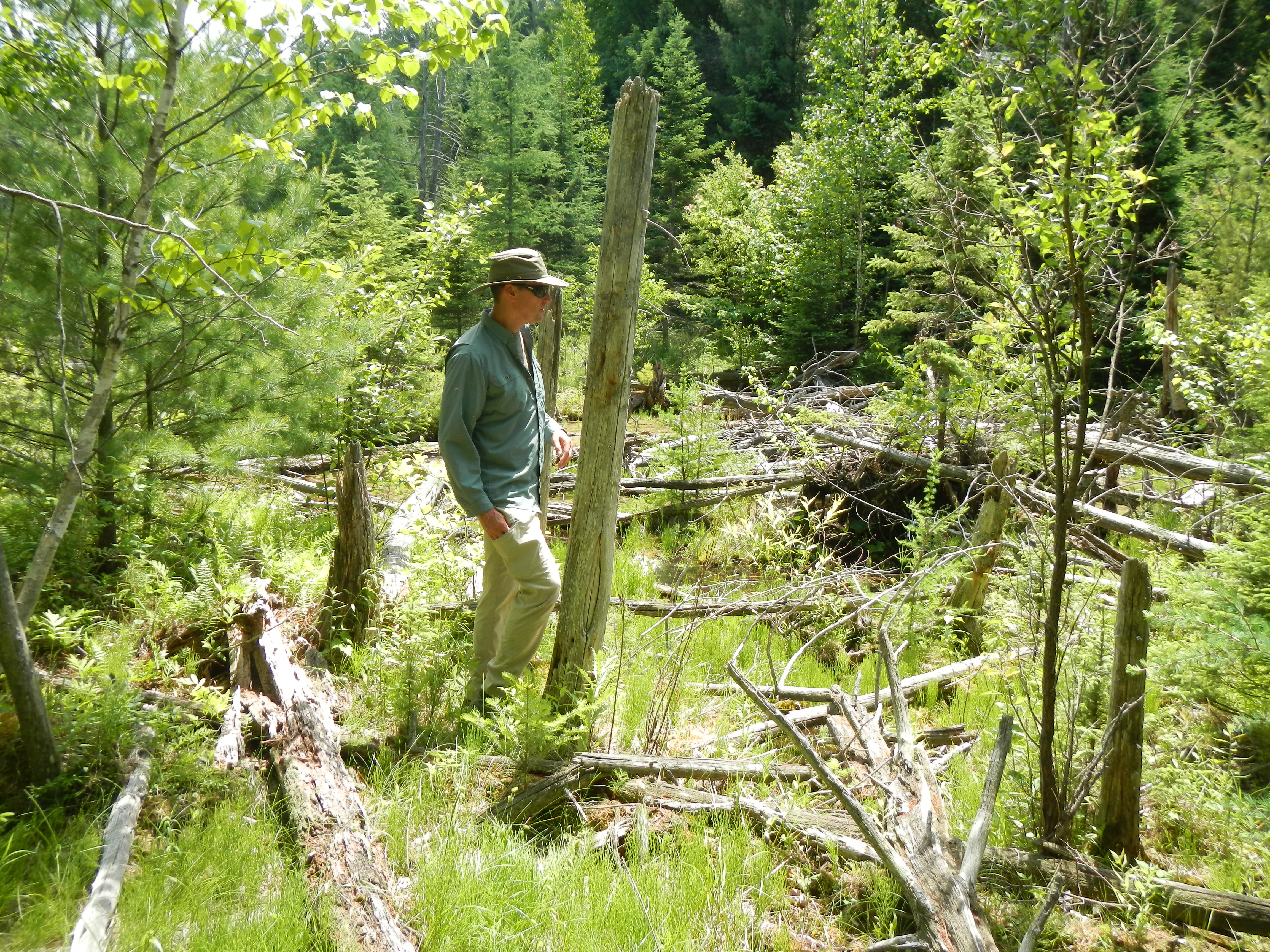 Todd in the Coppler Creek Canyon above the powerline cut, a serious bushwhack...but there's brookies in there!