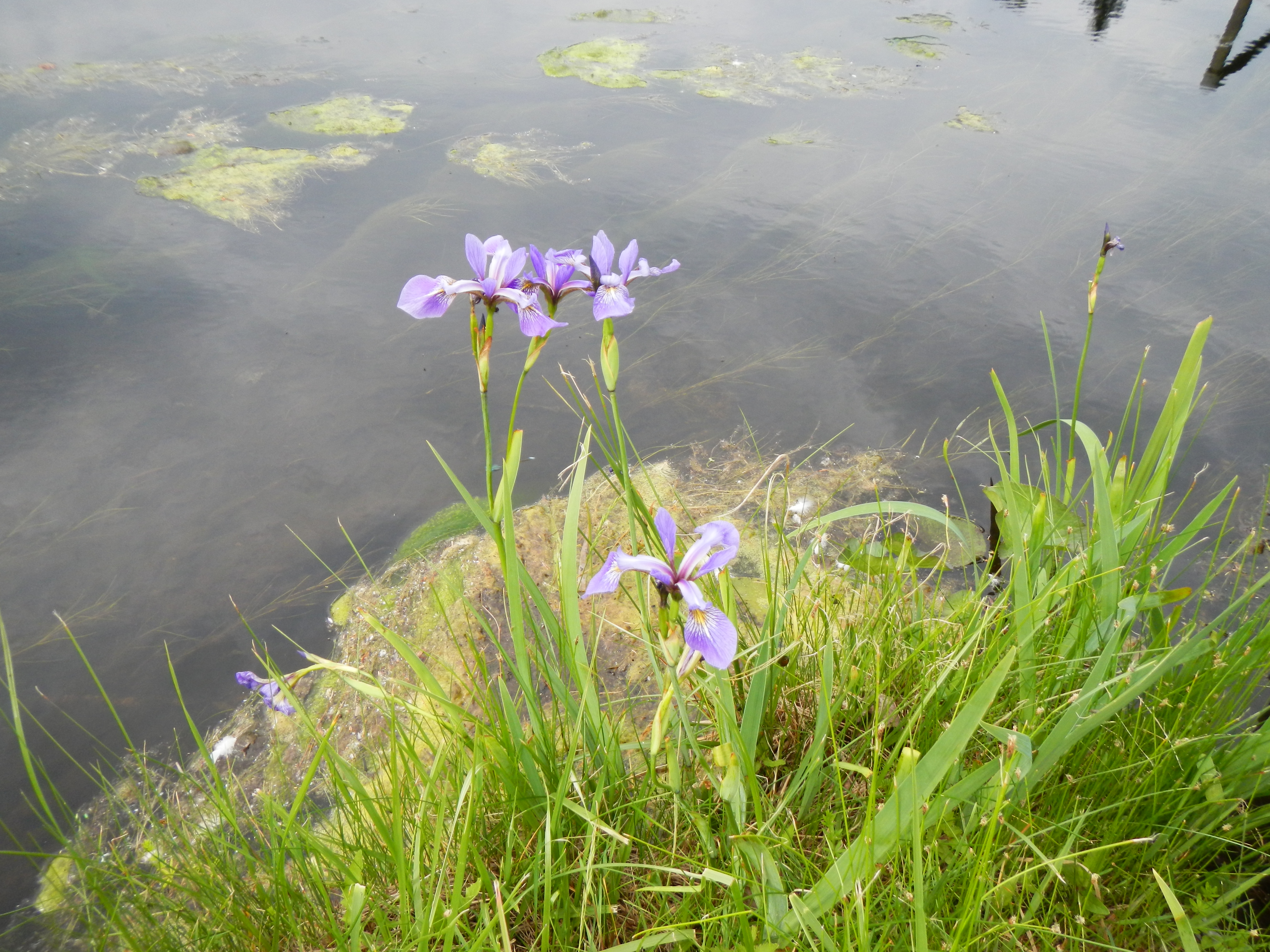 A beautiful place nevertheless, as these irises show...