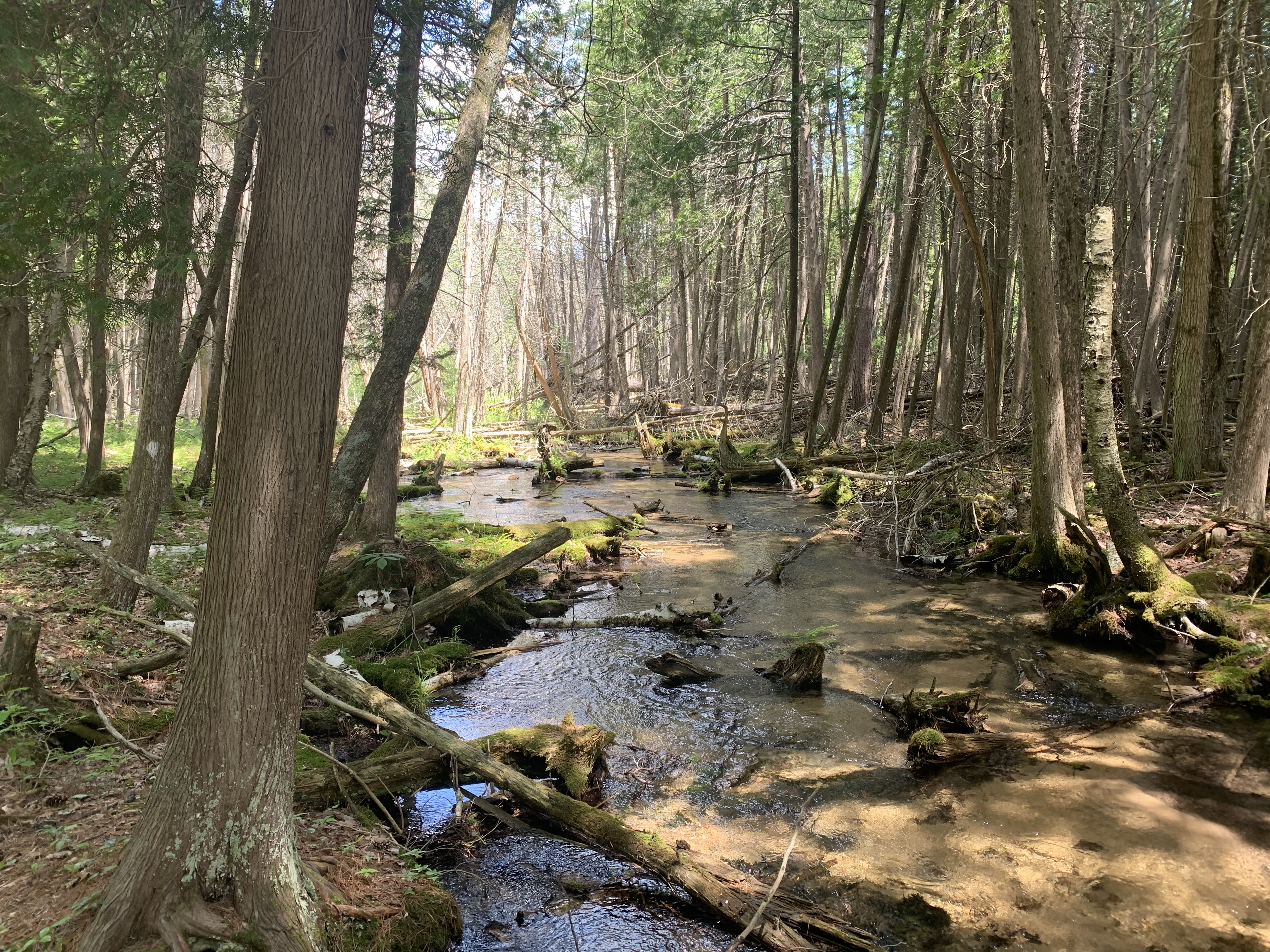 A cool canopy of northern white-cedar and cold, clear brookie waters
