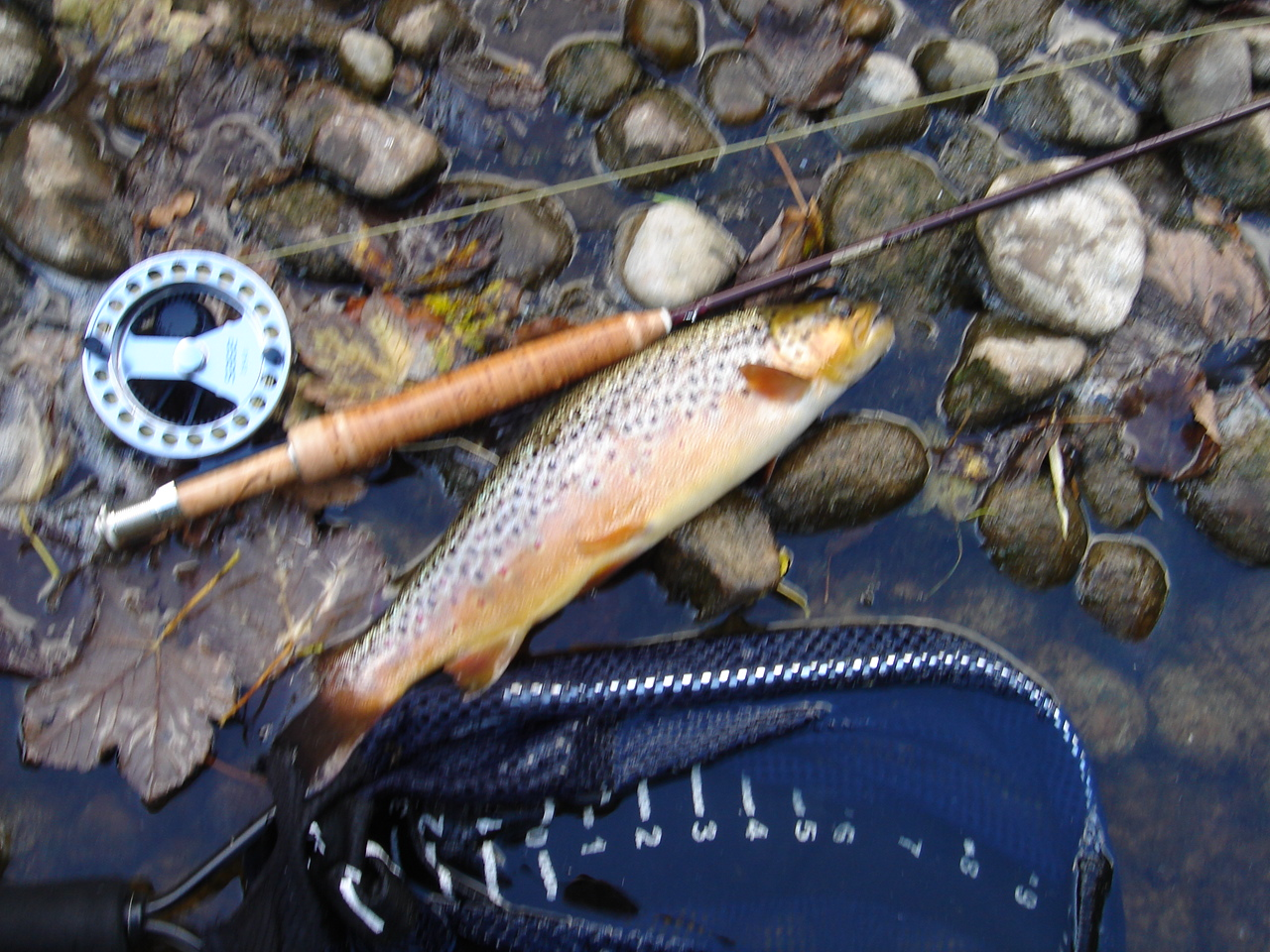 after matching the hatch all day in Burnsall with little result, i tried a big CDC ant with white legs and this fellow slammed it.  the picture is blurry because i hold my breath when i lift the fish out of the water to make sure it goes back in pretty quick.  this fish confirmed once again my opinion that the pool next the parking lot is always worth a try, since everyone else knows it's far too pressured.