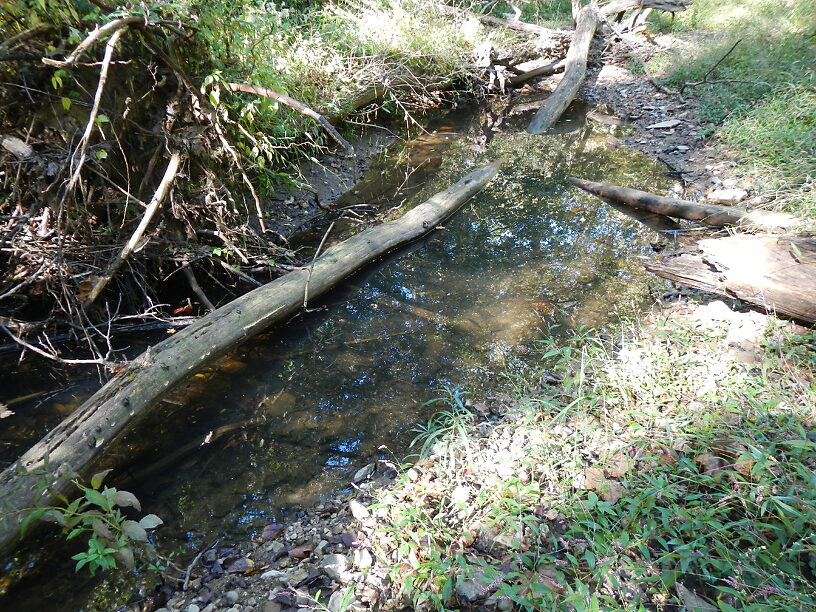 Side channel - high habitat diversity in a small stream & it showed in the biota