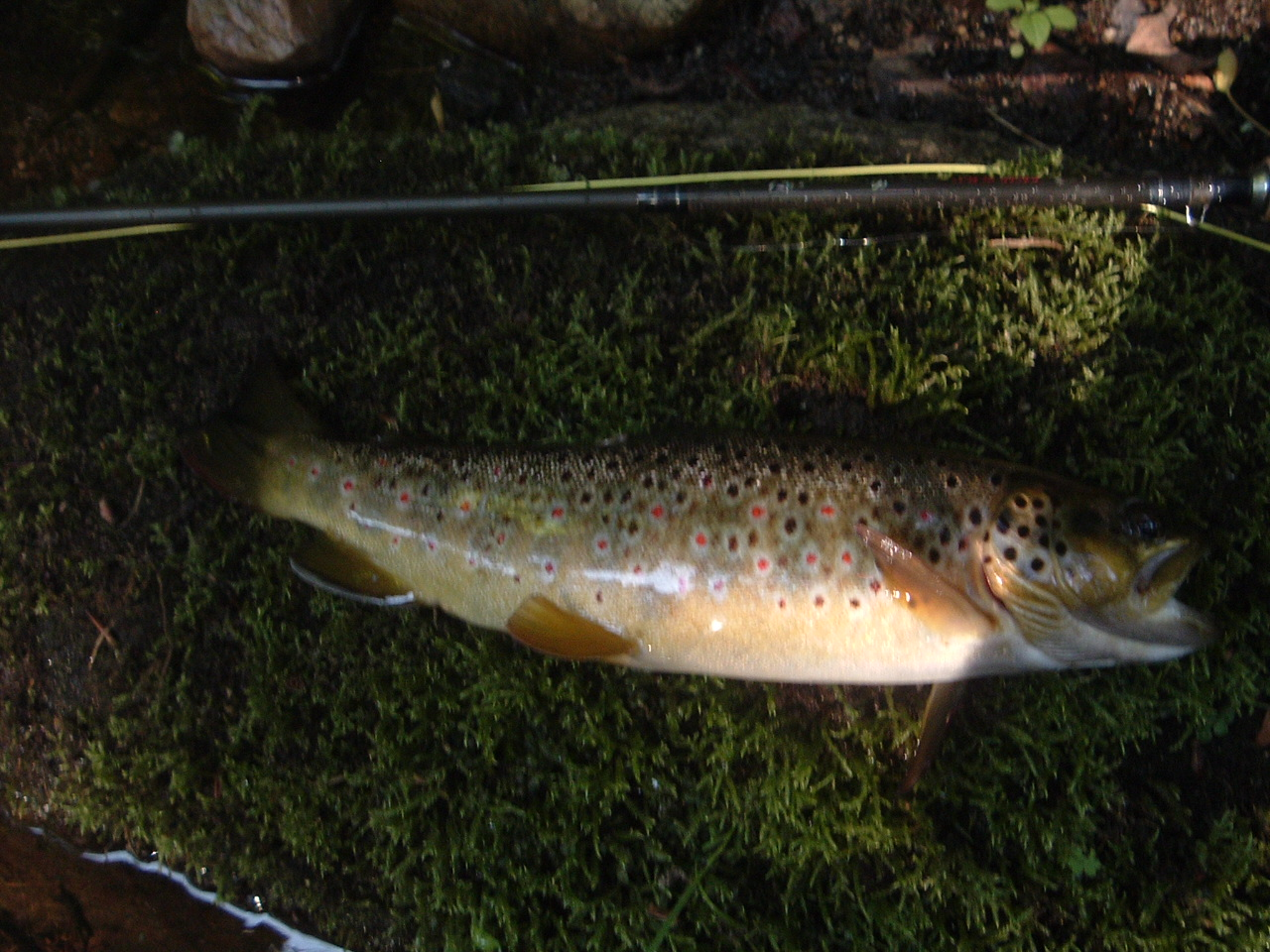 11in Wild Brown
