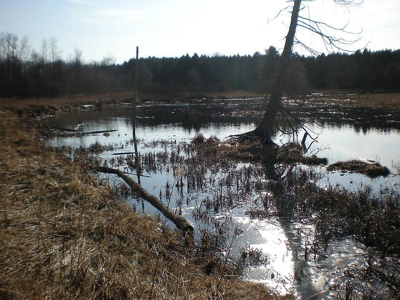 Clark's Marsh (was frozen last time I took pictures!)