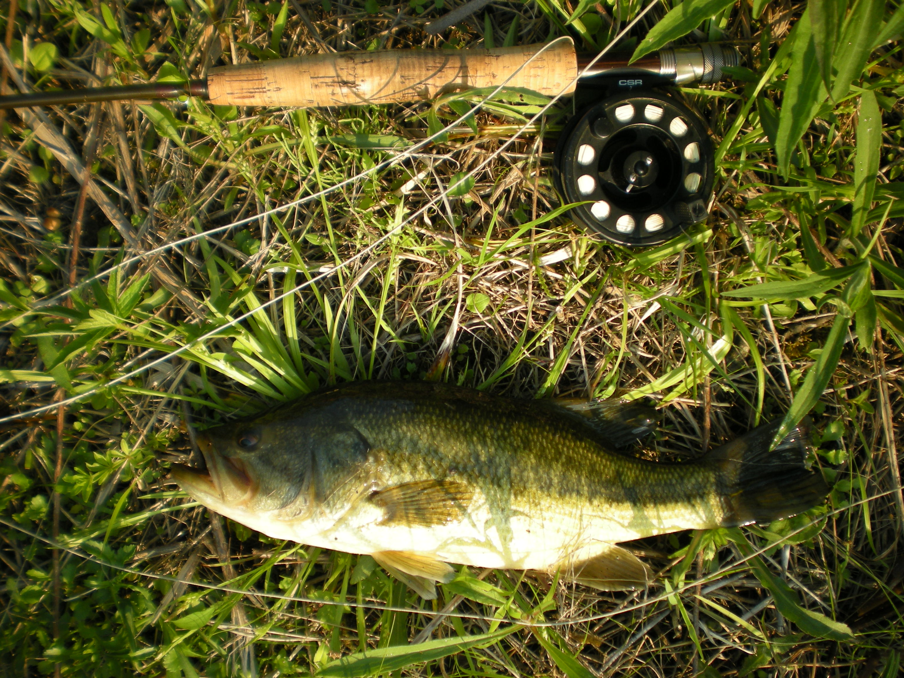 """15-incher that nailed a """"froggy popper"""""""