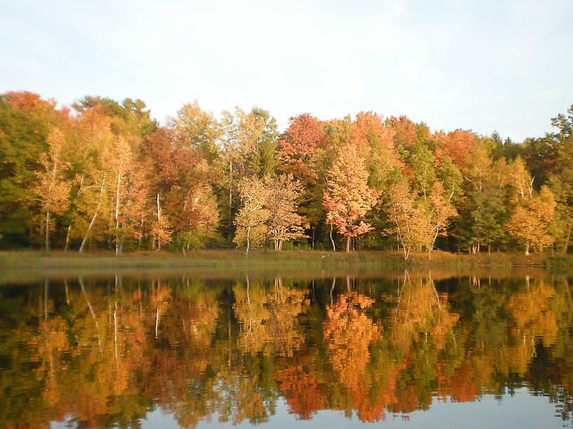 Cooke Pond Shoreline