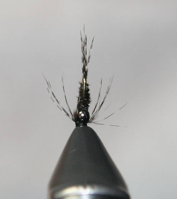 Bottom view of Nymph #2